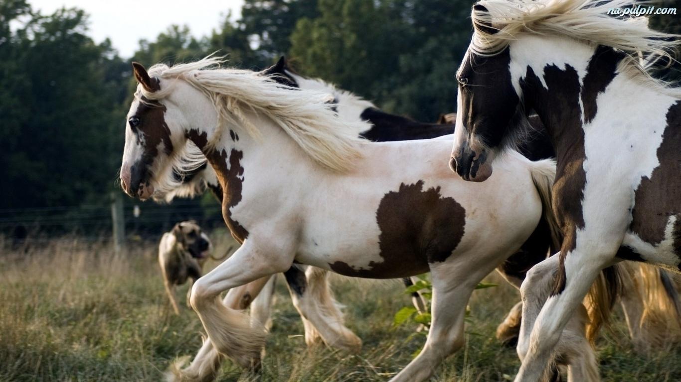 Resultado de imagen para fondos de pantalla de caballos